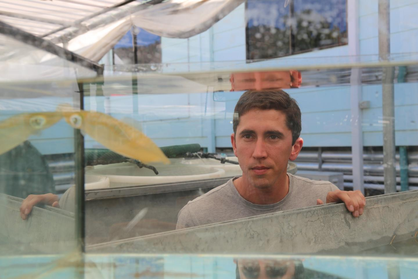 Dr. Blake Spady observes one of the squid, which is doing surprisingly well in acidic water