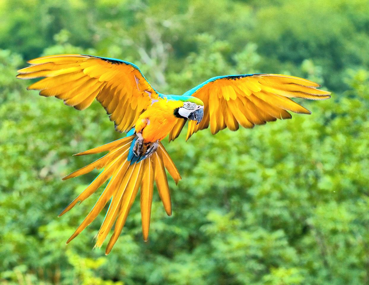 The bright colors of the Blue and Gold Macaw are caused by submicron surface structures (Photo: Luc Viatour)
