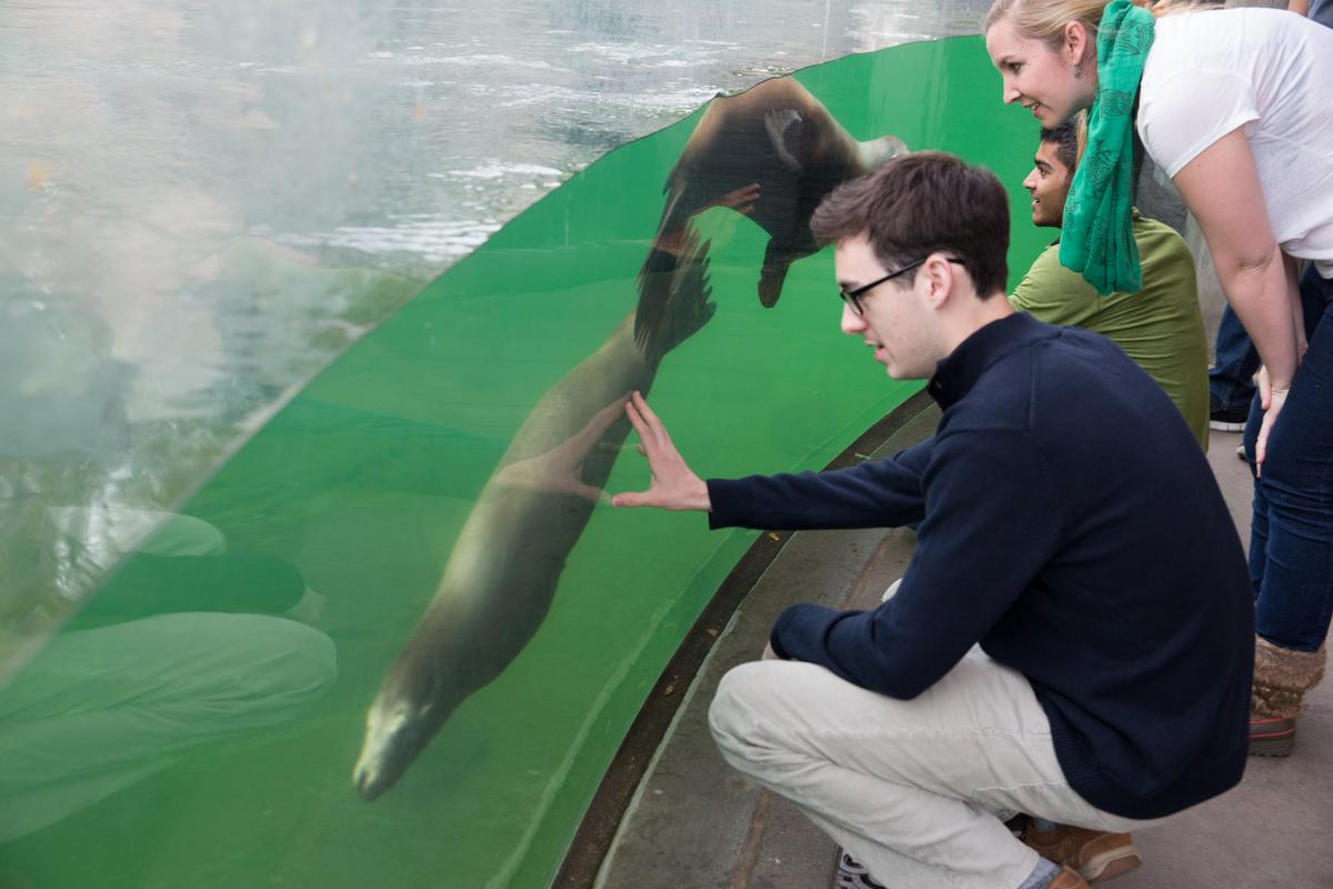 Prof. Megan Leftwich (upper right) and colleagues observe sea lions at the at the National Zoo in Washington DC