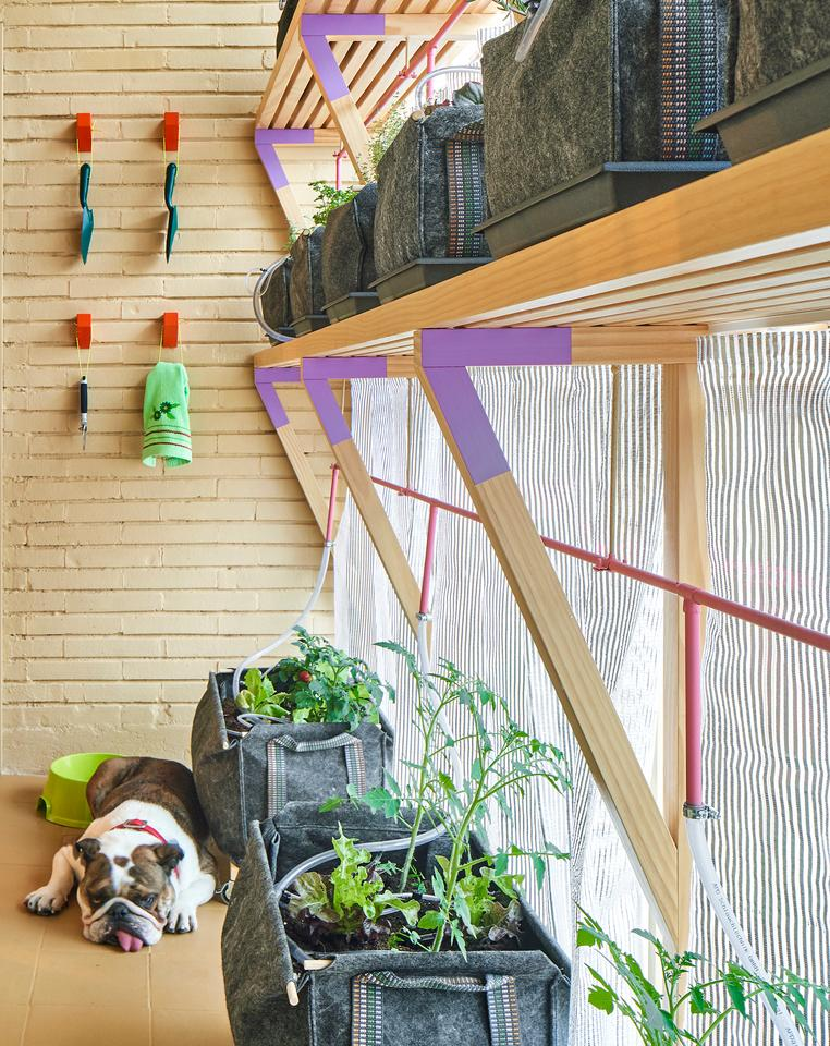 The apartment features a small indoor garden
