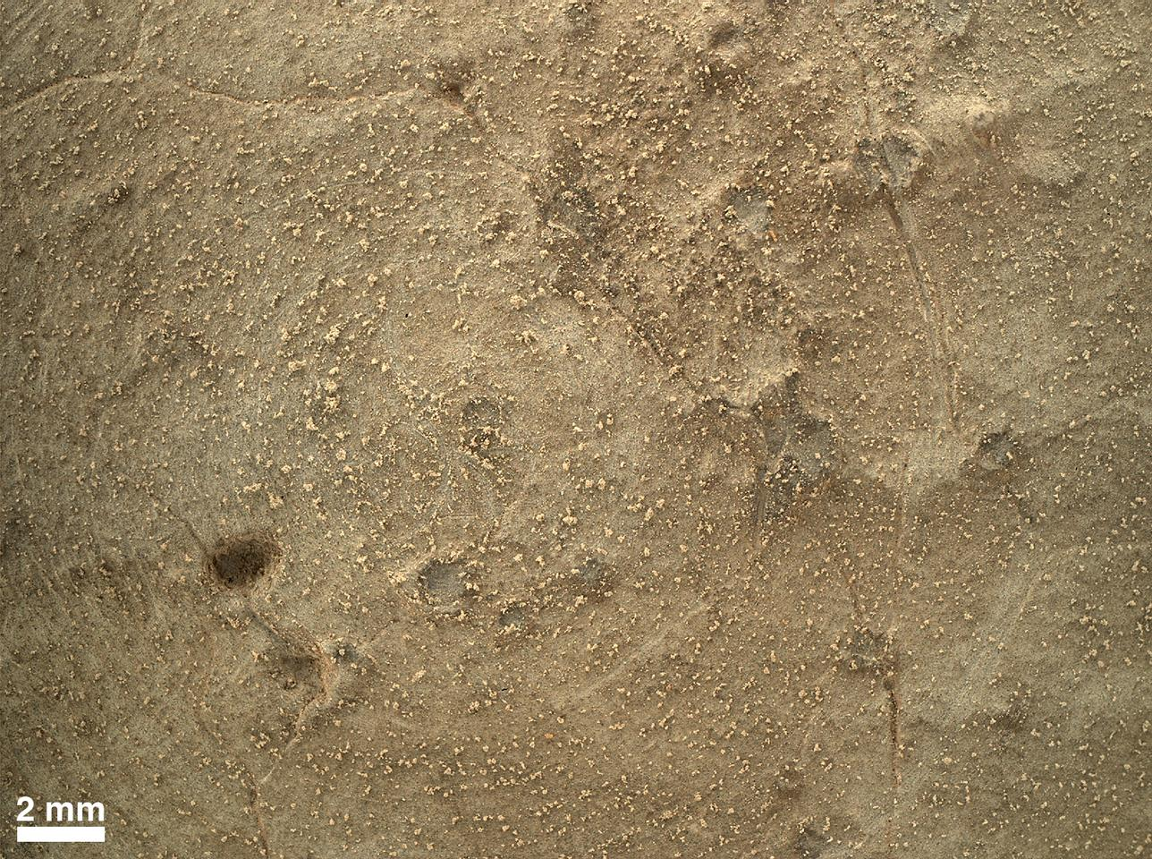"Close-up of brushed area on rock ""Ekwir_1"" at highest resolution of the Mars Hand Lens Imager (MAHLI) (Imaget: NASA/JPL-Caltech/MSSS)"