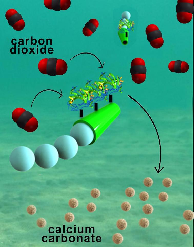 Nanomotors quickly move through water, removing carbon dioxide as they go