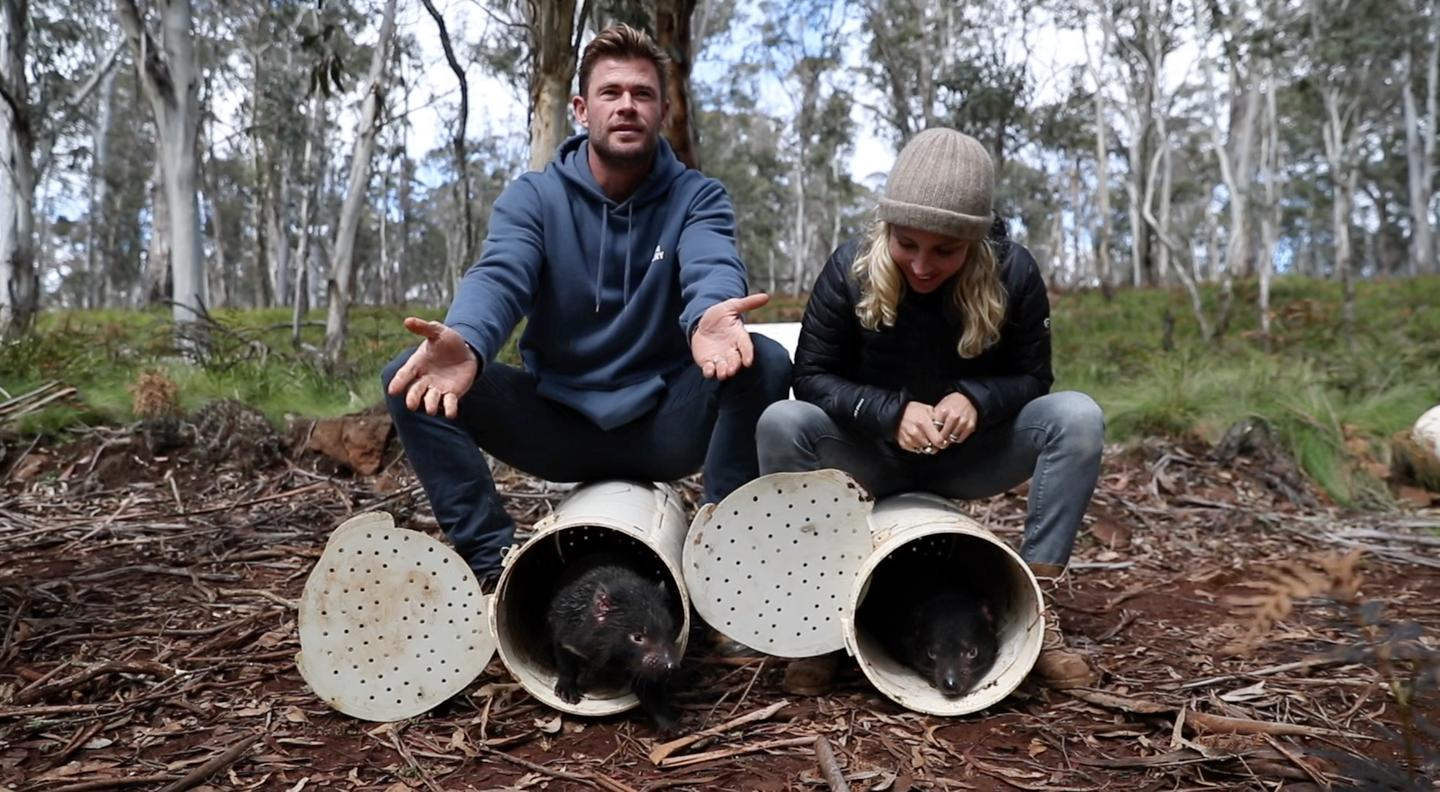 Actors Chris Hemsworth and Elsa Pataky help with the release of the Tasmanian devils