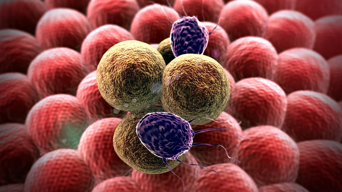 Researchers have uncovered a new method that has the potential to greatly enhance the effectiveness of existing cancer treatments (Image: Shutterstock)