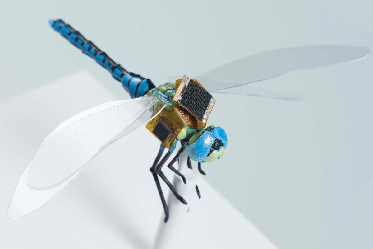 Through the DragonflEye project, researchers are developing cyborg dragonflies that can be remotely controlled thanks to electronics wired directly into their brain