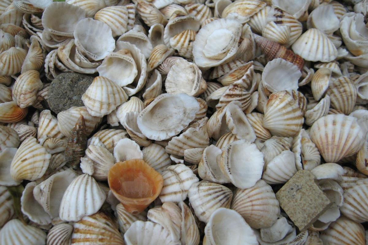 The structure of sea shells has inspired scientists to create a new material with similar qualities (Photo by seriocomico)