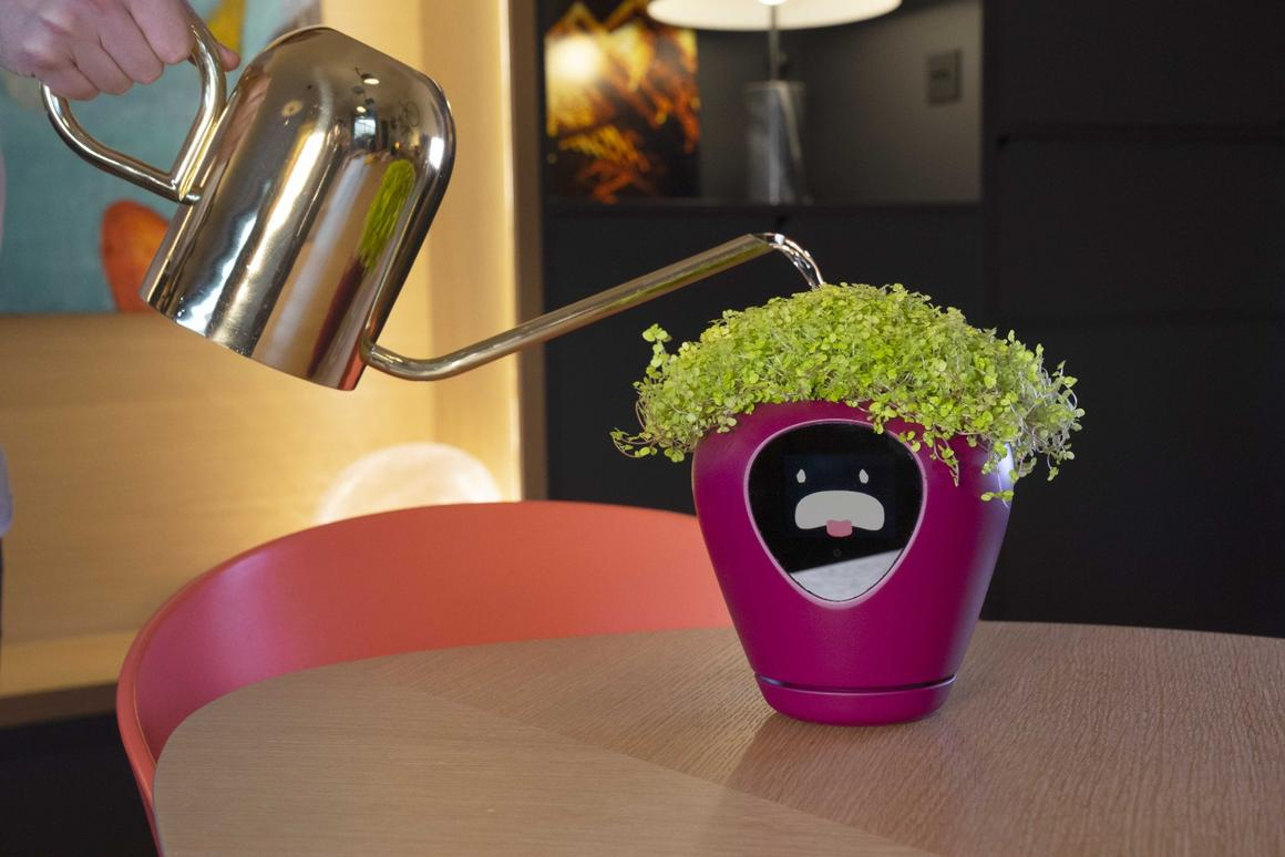 Lua will tell you when your house plant is thirsty via an animated face to the front of the smart planter