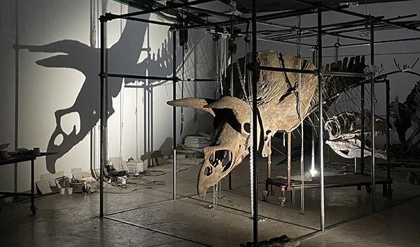 Big John is the largest Triceratops specimen ever discovered