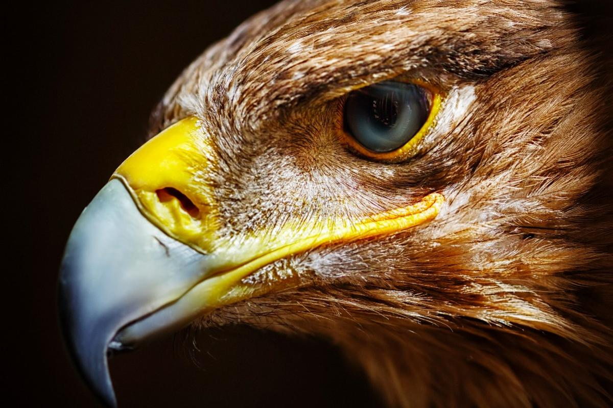 Eagles utilize foveated imaging, just like the tiny new camera