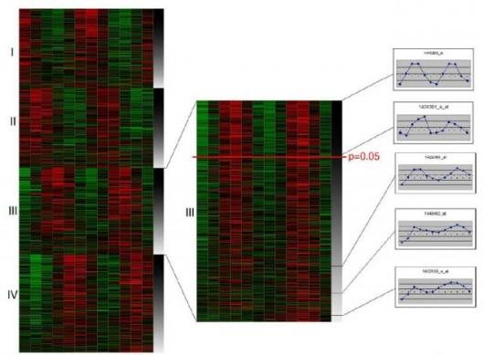 Gene expression analysis shows several different genes expressing in circadian rhythms.