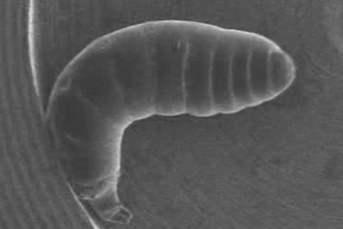 Nano-suited insects survive in a vacuum