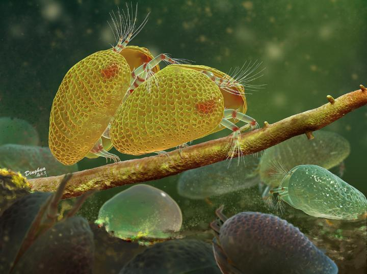 An artist's render of a mating pair of ancient ostracods