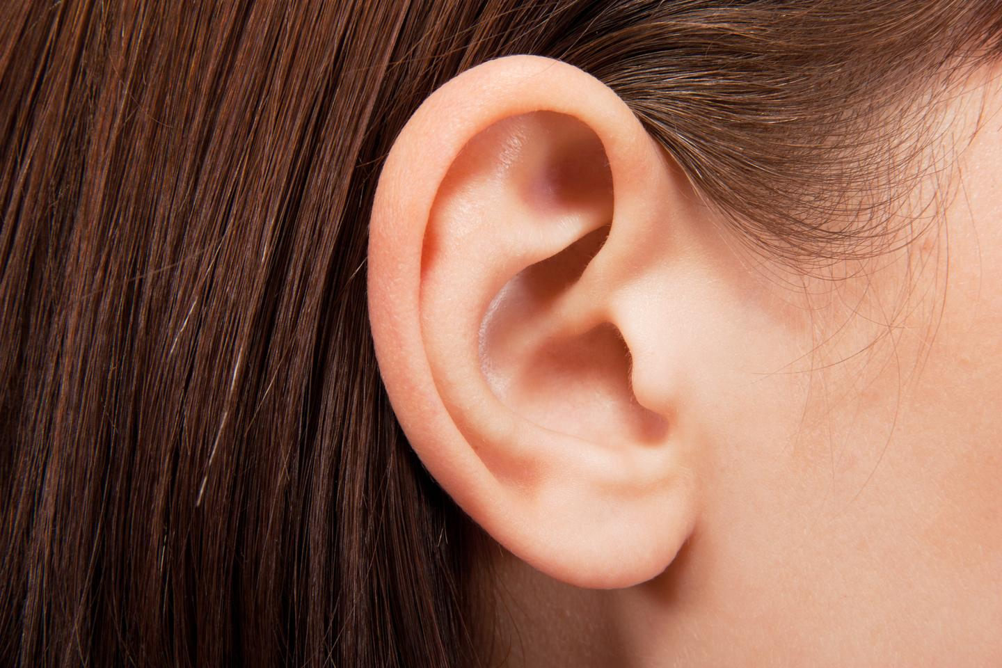 Damaged or deformed ears could be rebuilt using the patient's own fat (Photo: Shutterstock)