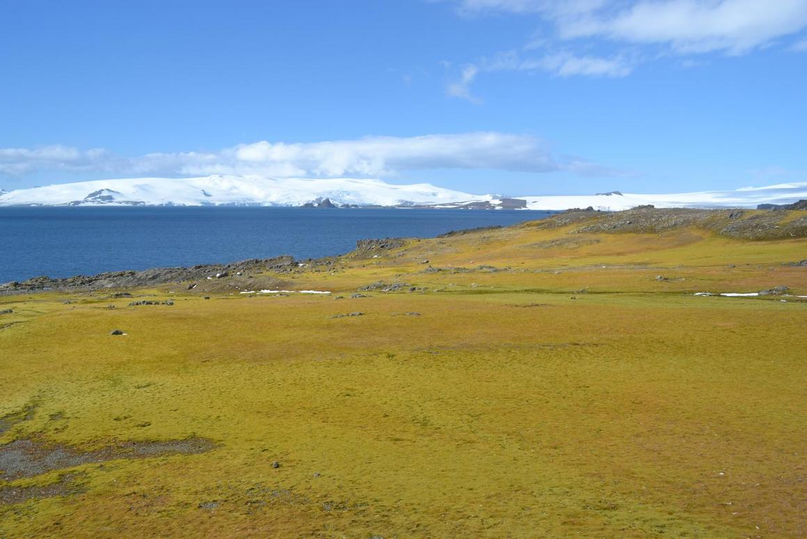 This picture, taken on Antarctica's Green Island, is a bit greener than most people would picture the icy continent, but a new study shows that plant life is increasing in response to warmer temperatures