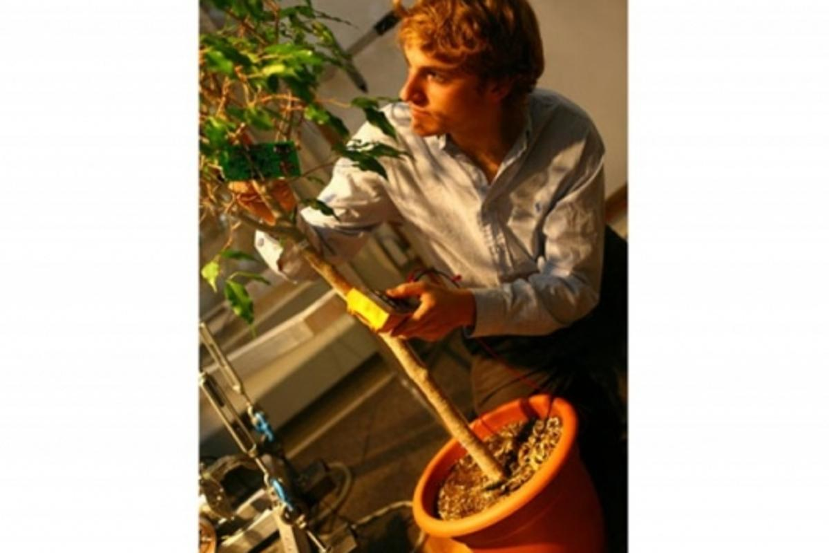 MIT senior Christopher Love works with a test tree