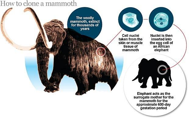 An embryo will be cloned from frozen mammoth tissue and transplanted into an African elephantVia The Telegraph