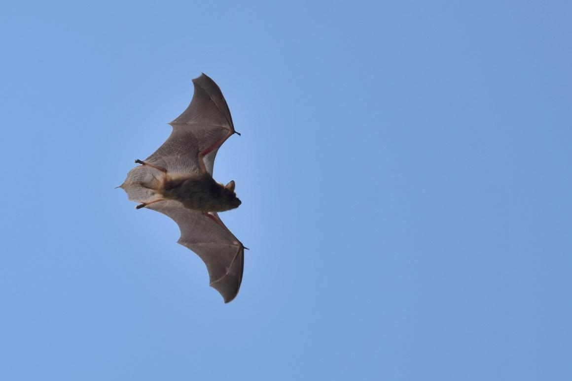 Bats and wind turbines traditionally don't mix well