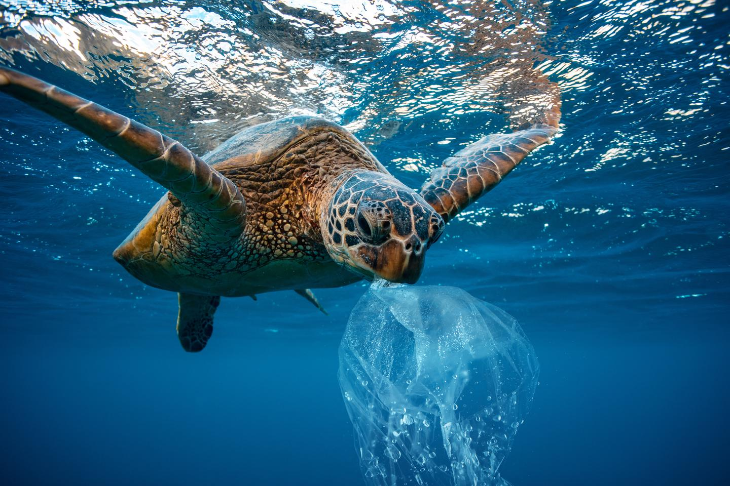 A new study has calculated the typical size of plastic waste different animals are able to consume