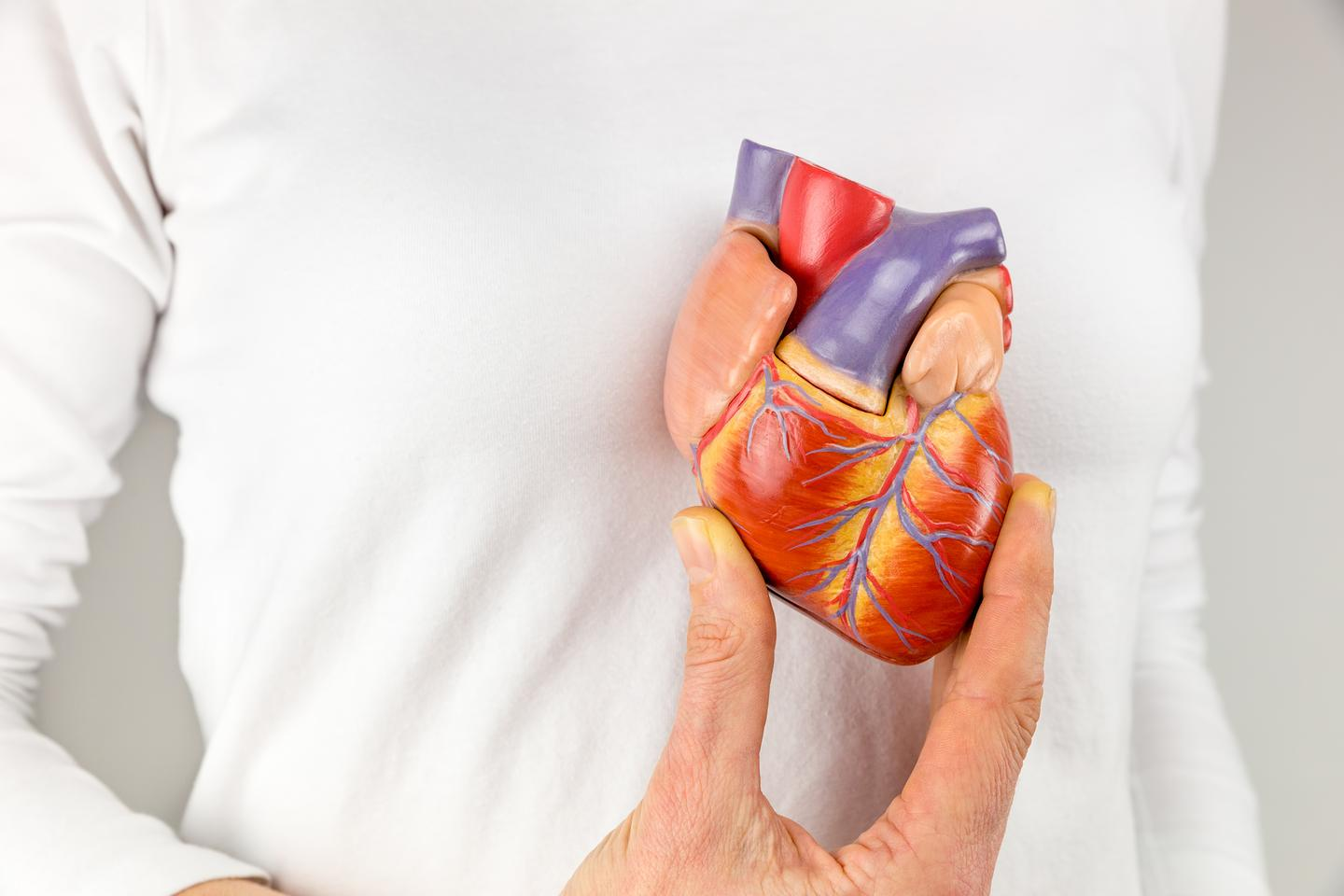"""Researchers have developed a bionic """"heart"""" (not pictured) using a real biological heart, which had its muscle tissue replaced with soft robotic material"""