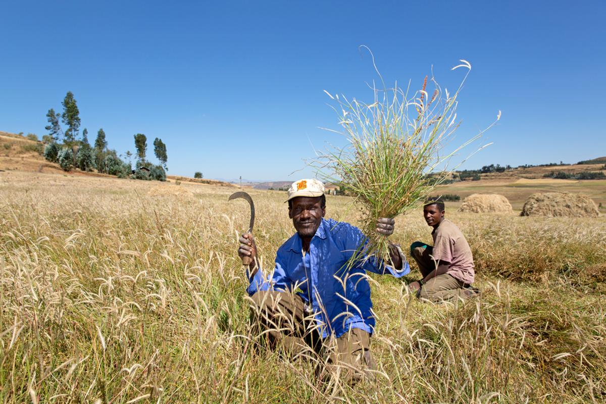 The Ethiopian government has rolled out a new phone service that farmers can call to get information on crops (Photo: Martin Good / Shutterstock.com)
