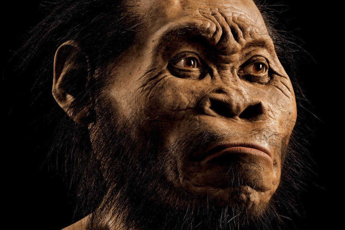 A reconstruction of Homo naledi's head by paleoartist John Gurche