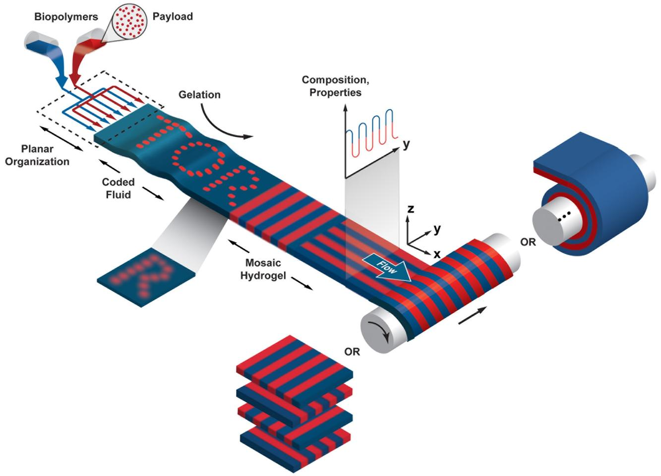 A diagram of the tissue-producing device