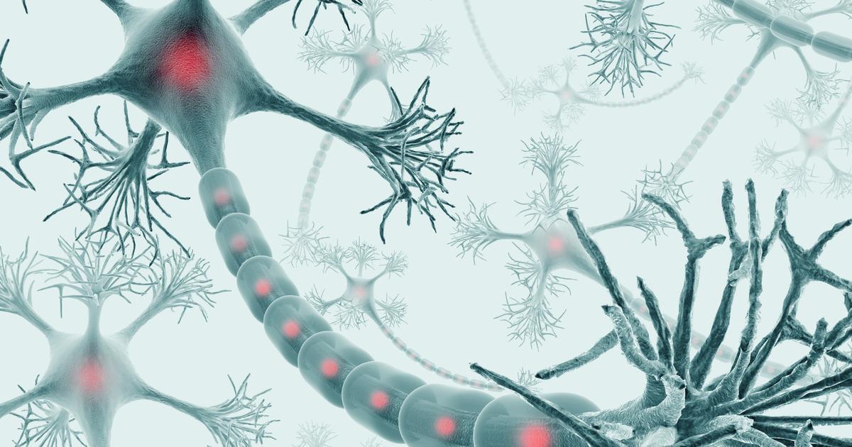 Molecule injections help repair spinal cord injuries in mice