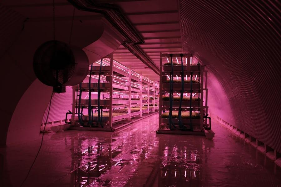 A farm set up in disused tunnels under the streets of London