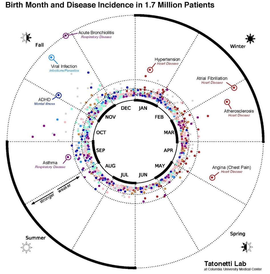 This data visualization maps the statistical relationship between birth month and disease incidence in the electronic records of 1.7 million New York City patients