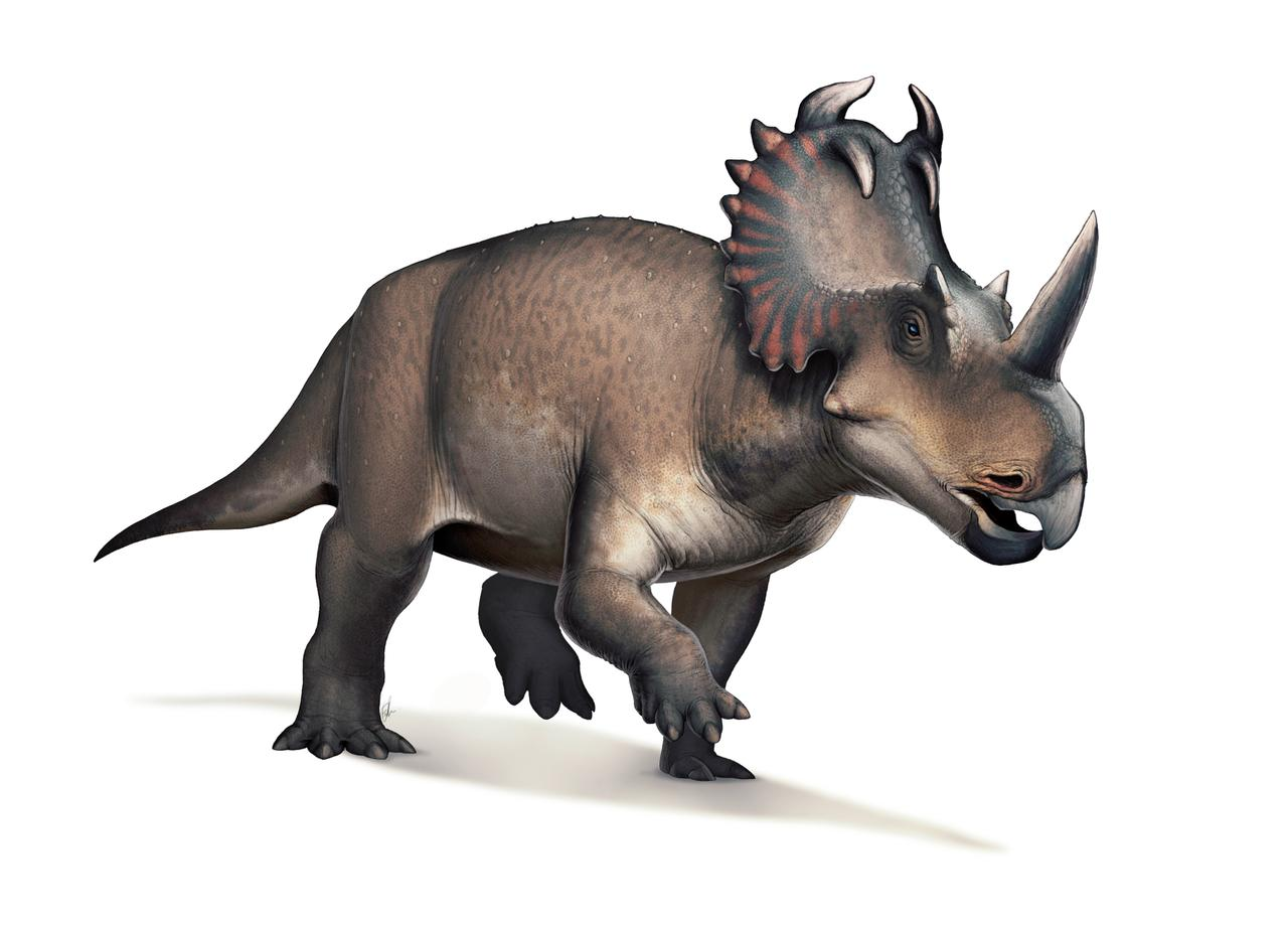 An artist's impression of a Centrosaurus, the dinosaur in which a new study has found an advanced bone cancer