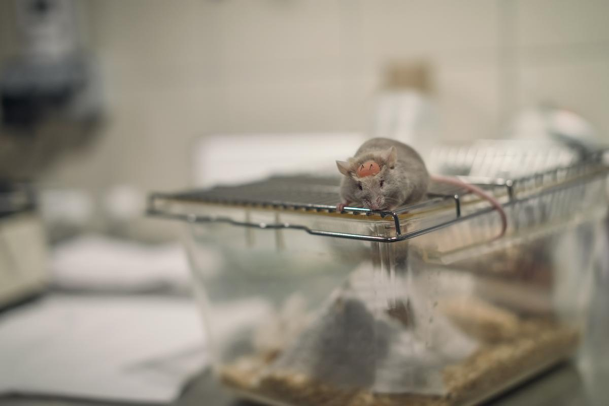 Researchers have tested a new bioprinting method on rats that can repair injuries to both skin and bones