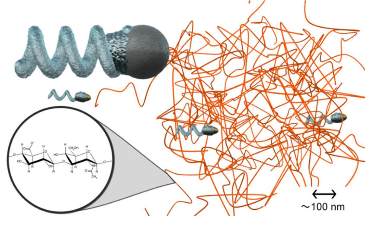 The nanoprop is able to easily pass between polymer chains, like those present in bodily fluids