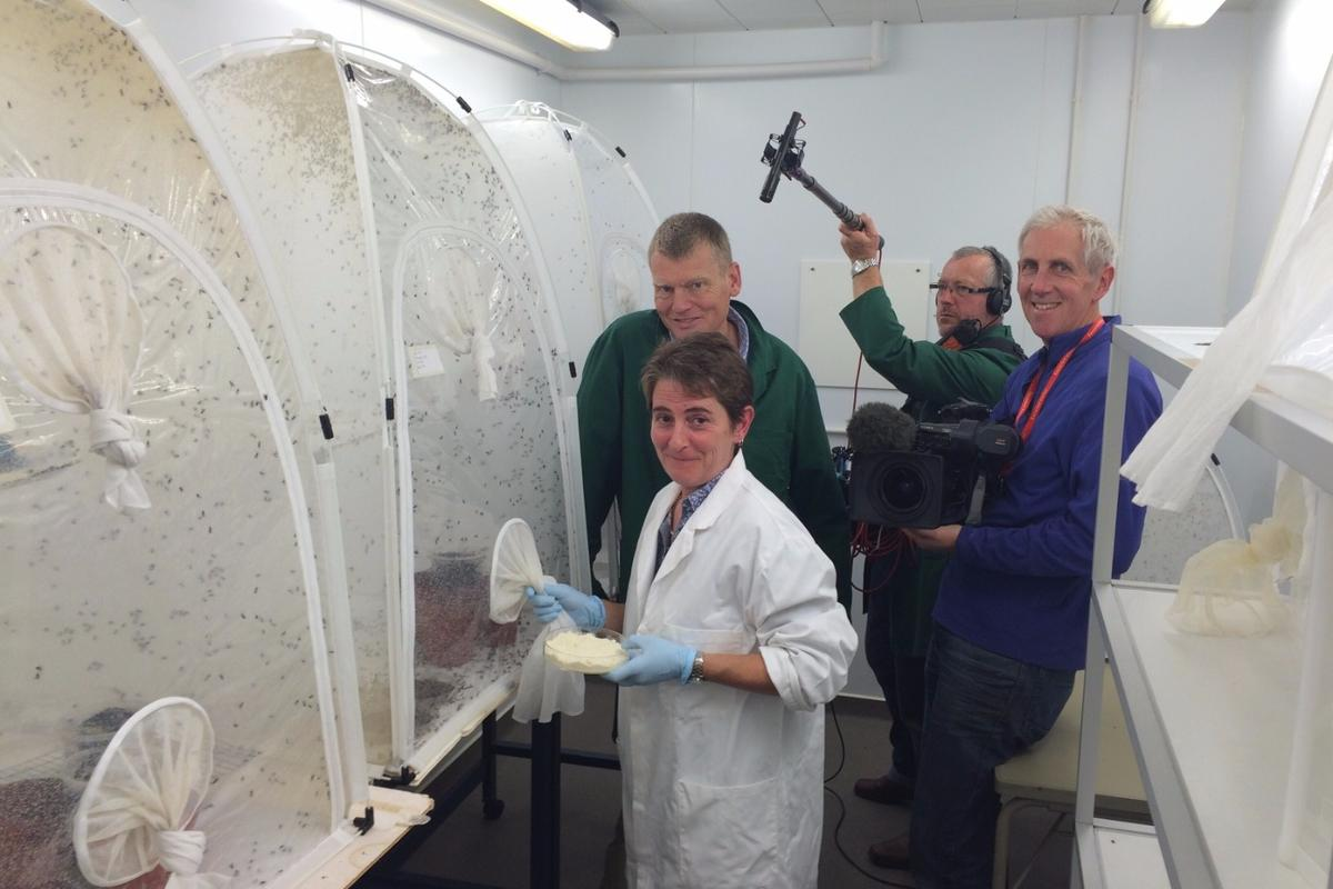 The EU is exploring the viability of fly larvae as a livestock food source.DrElaine Fitches, PROteINSECTproject co-ordinator, with a BBCfilm crew.