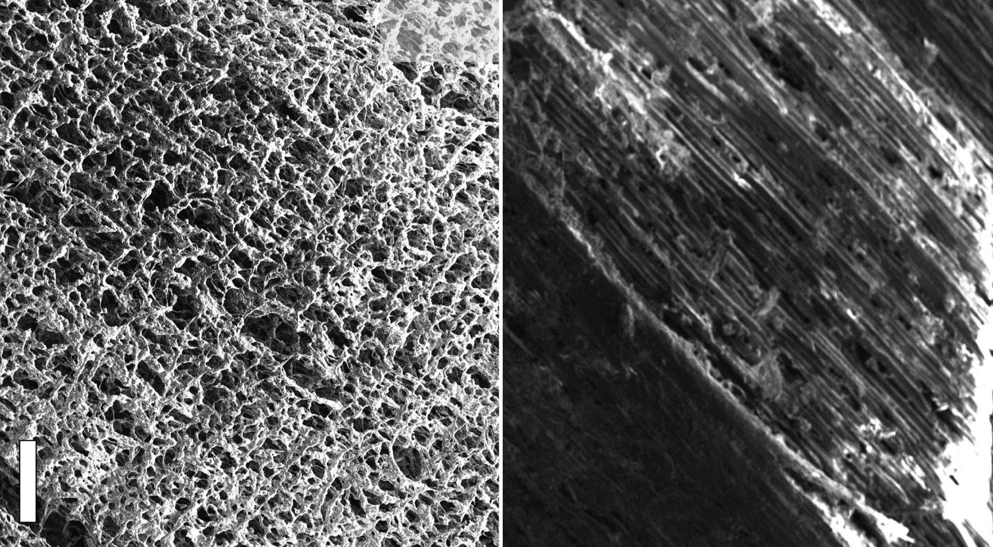 These scanning electron microscope images show pine wood, in the form of laser-induced graphene (left) and normal (right)