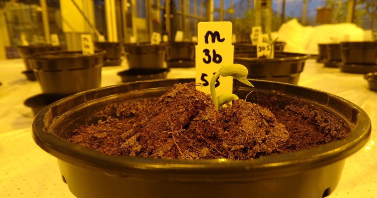 Human urine may be Number 1 for fertilizing plants on Mars