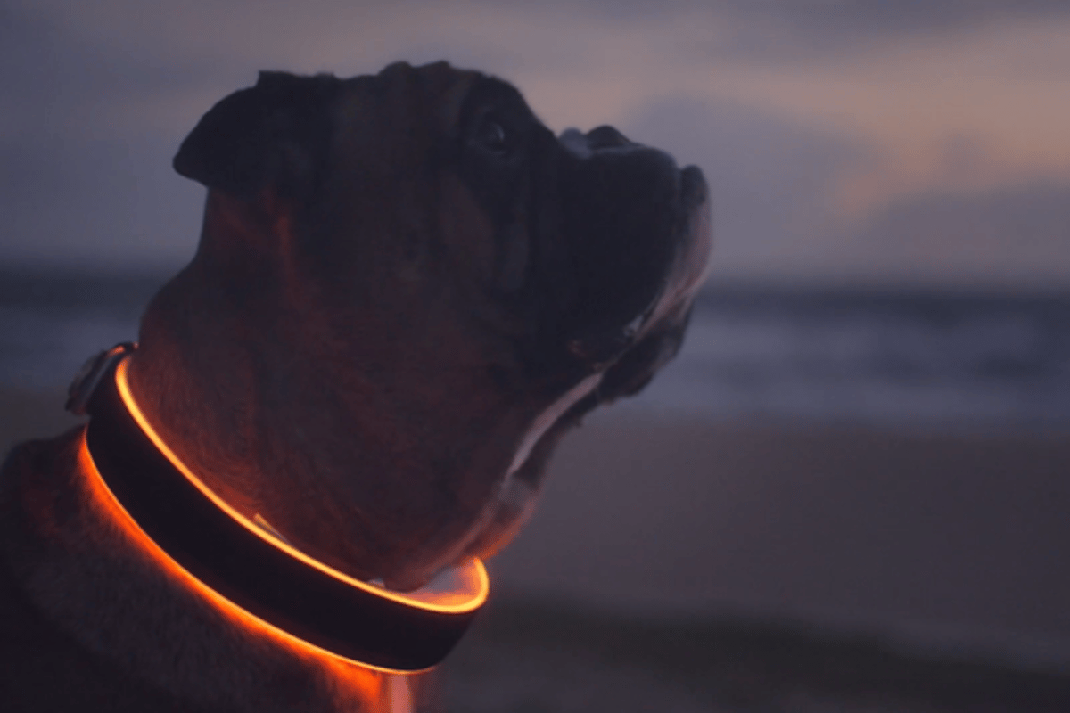 The Buddy smart dog collar comes in a number of different sizes for different breeds of dogs