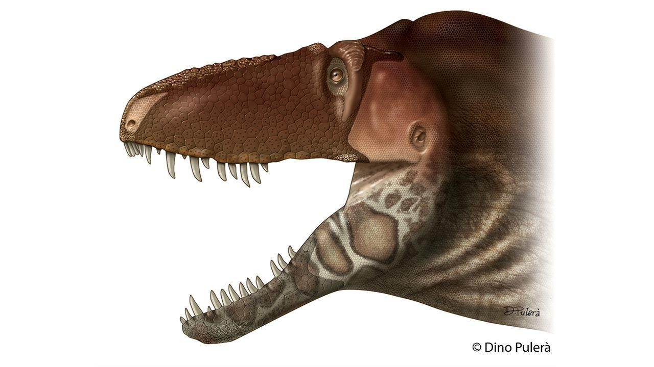 The reconstructed head of a Daspletosaurus horneri, with large flat scales adorning most of its face and bony, armor-like patches on its snout and the sides of its lower jaws
