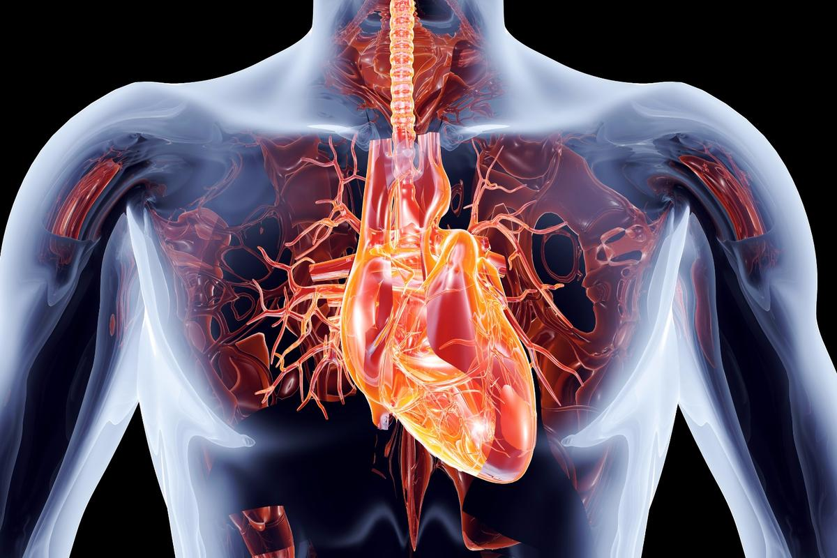 A protein called cardiotrophin 1 (CT1) has been shown to improve heart health in the same way that exercise normally does