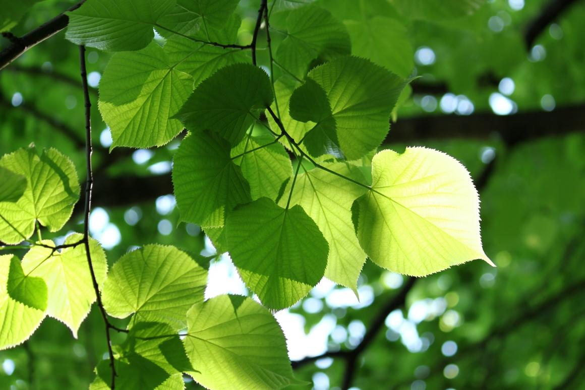Scientists have created an artificial photosynthesis device said to absorb more sunlight than natural photosynthesis itself