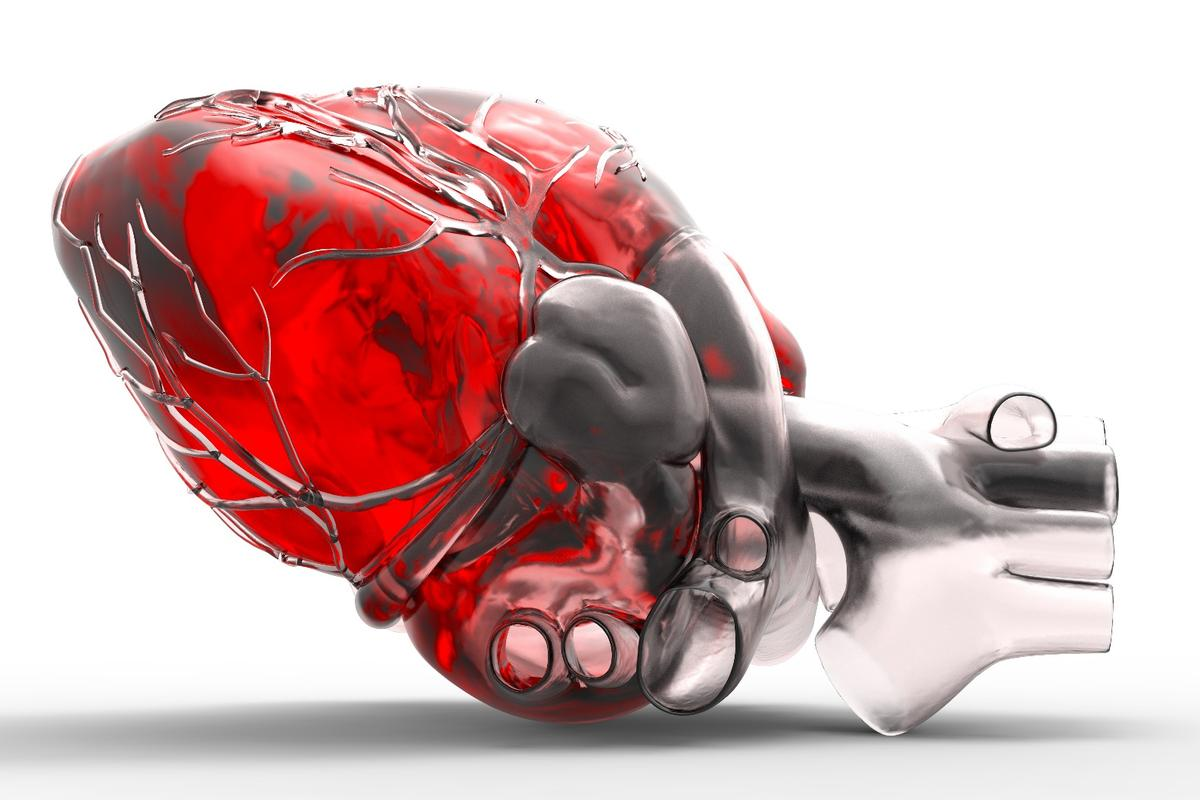 Human stem cells have been usedto regenerate the cells that cover the external surface of a human heart