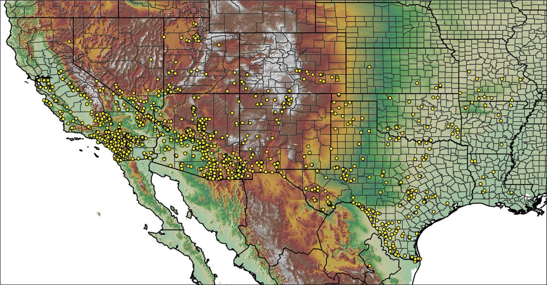 Distribution of tarantula species throughout the U.S.