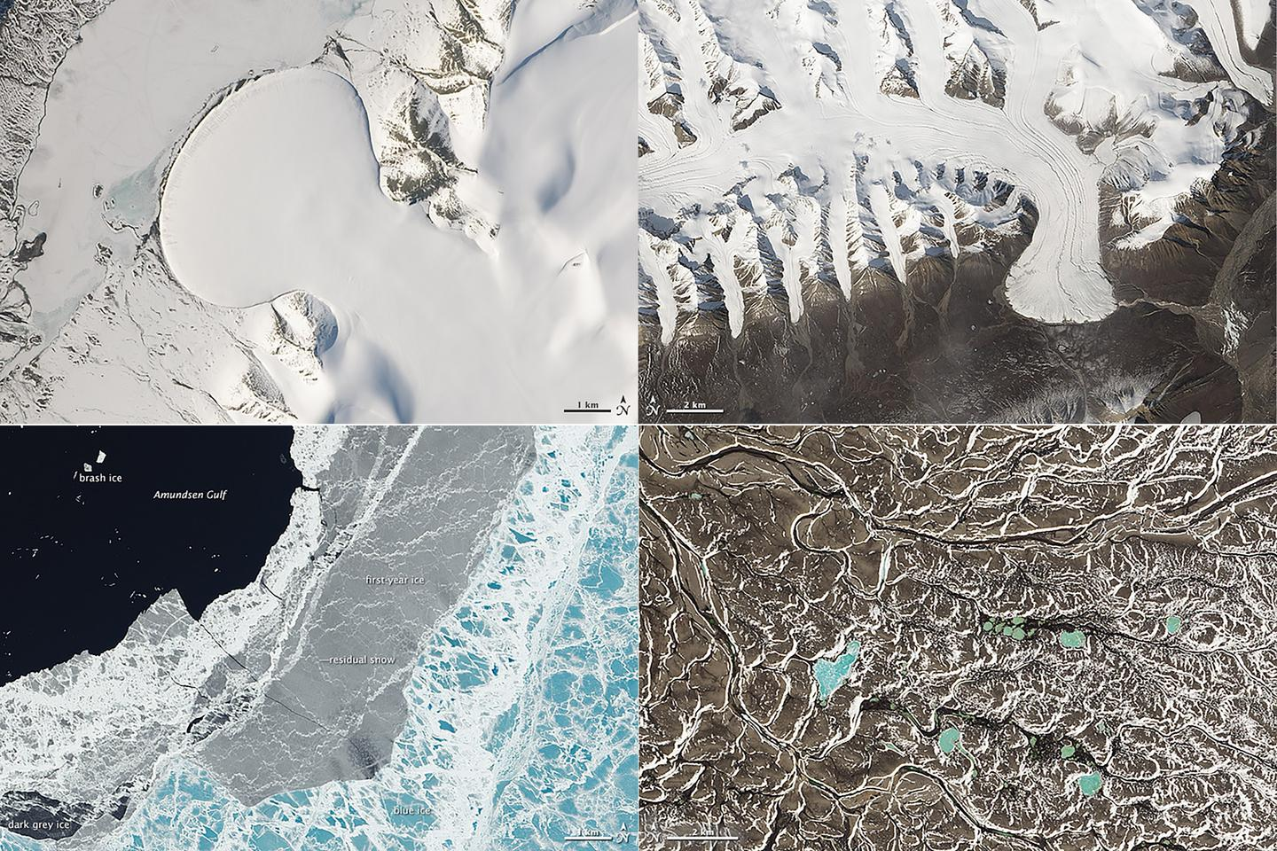 North Greenland's Elephant Foot Glacier (top left), Canada's Ellesmere Island glaciers (top right), the sea ice in the Amundsen Gulf (bottom left) and chains of lakes in the Northwest Territories (bottom right) (Image: NASA Earth Observatory)