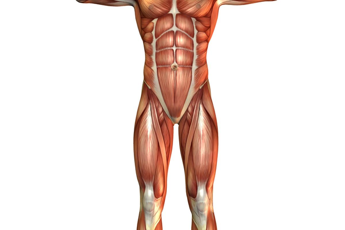 New technology is able to capture 3D images of muscle contractions in less time and more detail than was previously possible (Muscle Man image via Shutterstock)