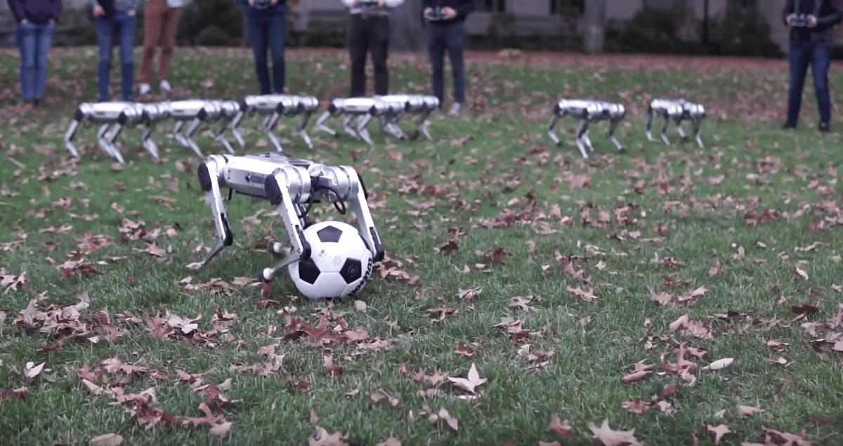 The Mini Cheetah robots ready to