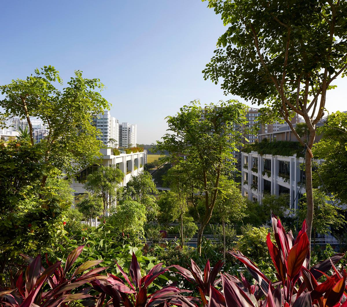 Oasis Terraces is defined by its lush greenery