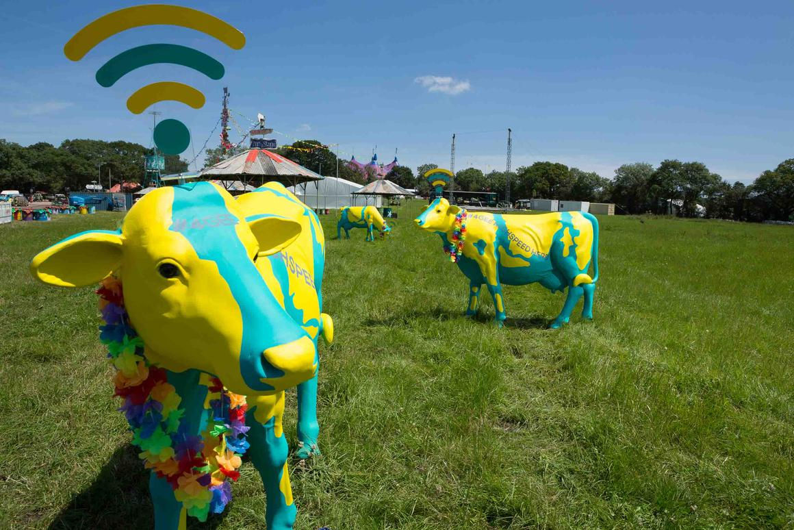 The glass-fibre cows at the Glastonbury Festival act as WiFi hotspots