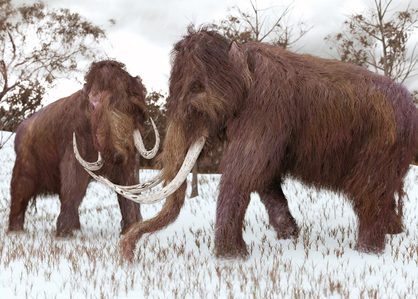 Wooly mammoths had tusks that could reach 15 feet (5 meters) in length