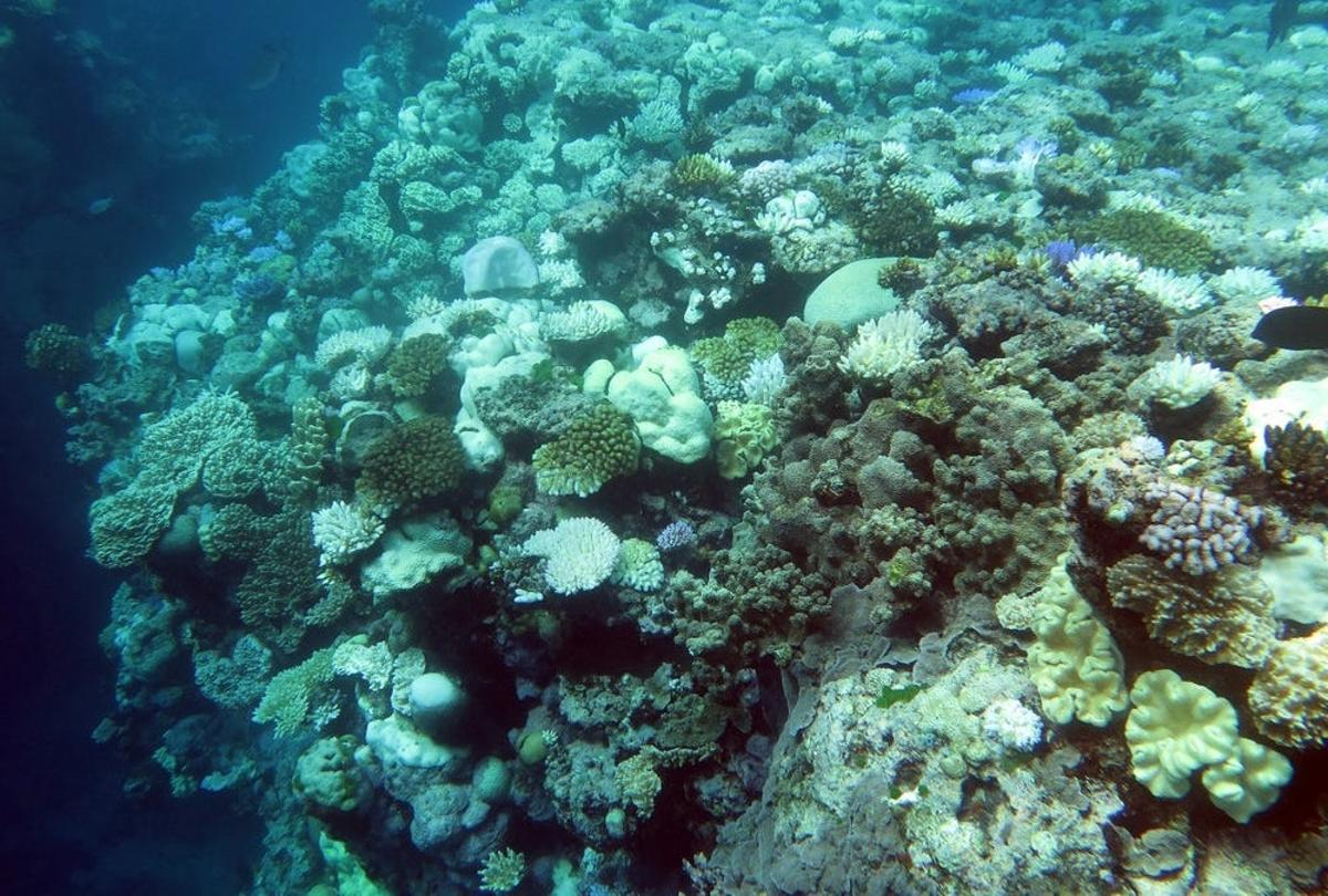 In an effort to help protect the Great Barrier Reef,Australian researchers have proposed recycling dead coral fragments into large structures that promote new growth