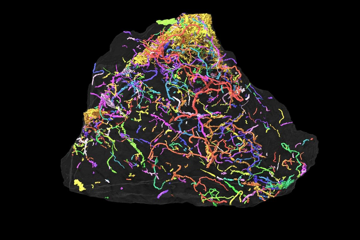 This X-ray microtomography scan of fossils found in Brazil shows an intricate network of tiny tunnels left by some of the oldest complex lifeforms to arise
