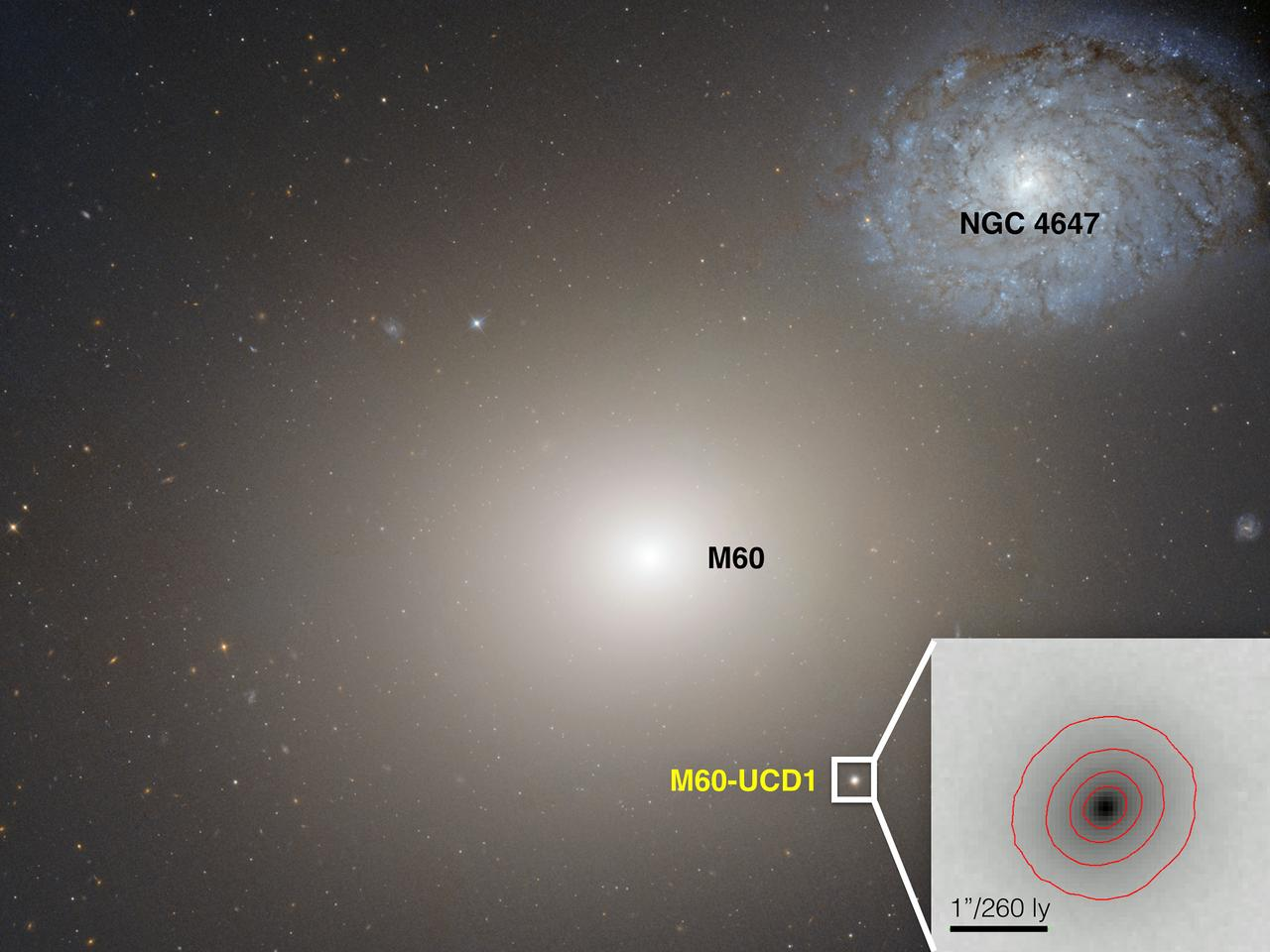 Dwarf galaxy M60-UCD1 in compostie with M60 (Image: NASA/Space Telescope Science Institute/European Space Agency)